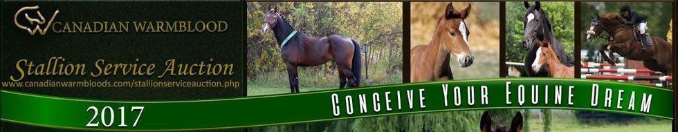 2016 stallion service auction ad final revision