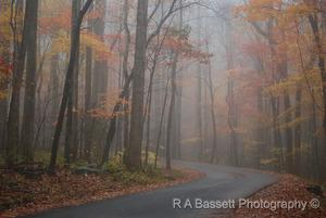 334 misty roaring fork road  gsmnp  tn rab s300