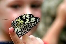 Butterfly s550