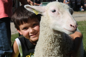 Un agneau comme ami s300