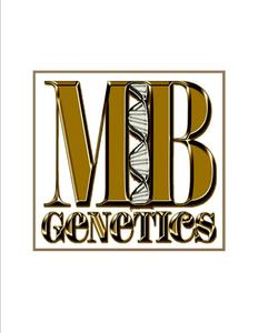 Mb logo   gold for fb s300
