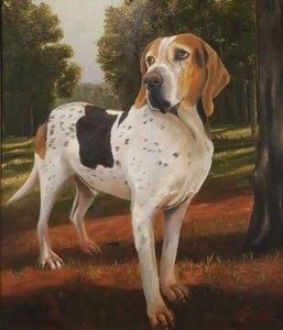 Reian williams beagle s300