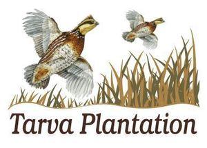 Tarva plantation s300