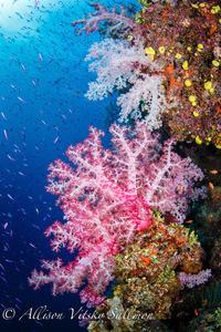 Reef scenic 2607 1 s300