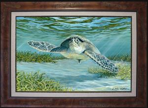 Med fr mangrove fine art sea turtle steve whitlock s300