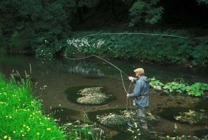Trout fishing wwwdavidmasonimagescom s300