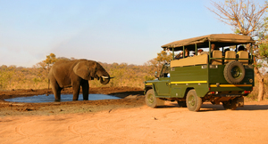 Elephant and safari jeep copy s300