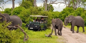 Safari s300