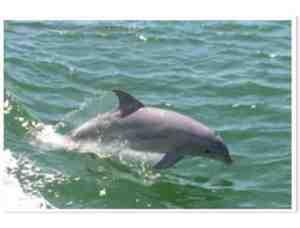 Dolphin cruise s300