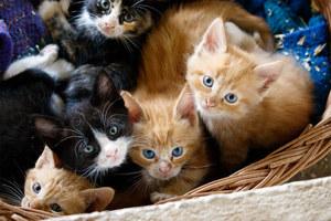 Kittens s300