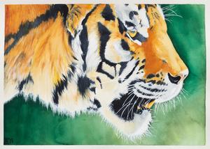 Tiger s300
