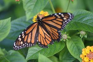 Butterfly s300