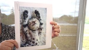 Cat pix 1 s300