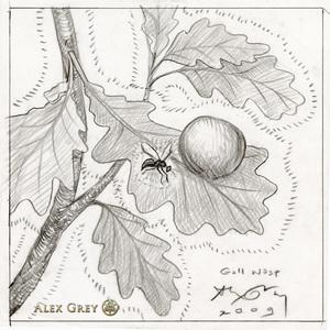 Alex grey 2009   gall wasp study web s300