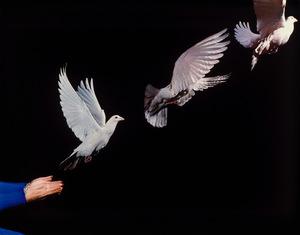 65002 pigeon release s300