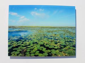 Lake okeechobee s300