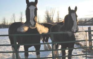 Winterhorses 1 orig s300