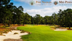 Pine needles mid pines s300