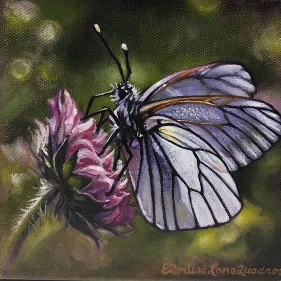 Butterflyelq s550