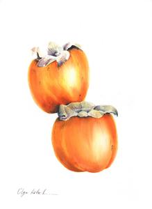 Olga koelsch lot3 golden persimmons s300