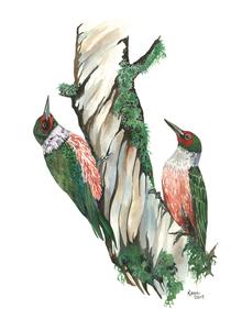 Reyes lewis woodpecker 16 x20  framed s300