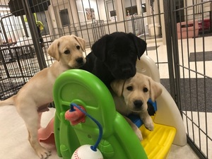 Pearl puppies on slide sept. 2019 s300