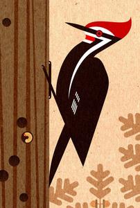 Scott partridge pileated woodpecker s300